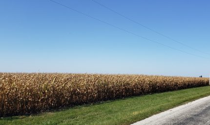 Land Auction – 213.76 Surveyed Acres – 4 Tracts – Prime Farmland-Hunting & Recreational Property – Henderson & McDonough County, IL