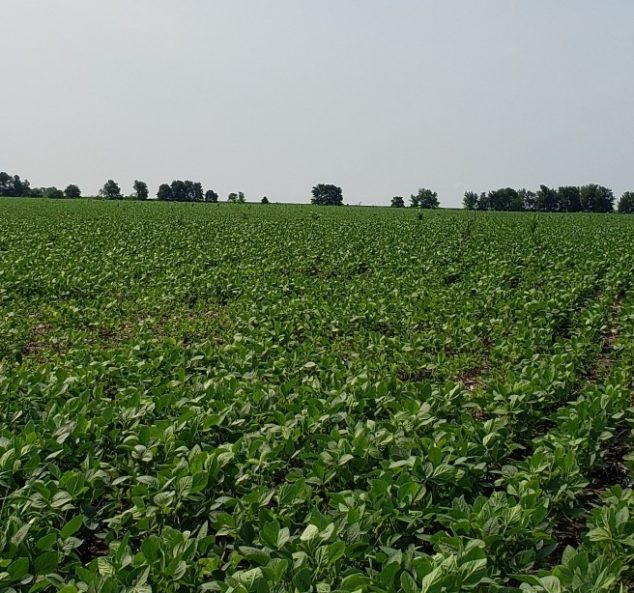 Land Auction – 117.08 Surveyed Acres – 2 Tracts in Knox County, IL