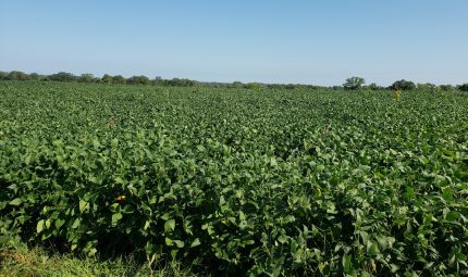 Land Auction – 78.35 Acres – 2 Tracts in Knox County, IL
