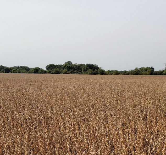 Land Auction – 49 Acres – 1 Tract in Mercer County, IL