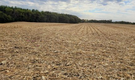 Land Auction – 77.75 Acres – 2 Tracts in Mercer County, IL